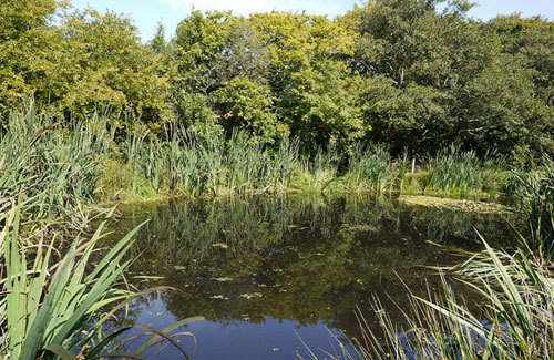 Pond lake excavation specialists south devon swimming for Small natural pond